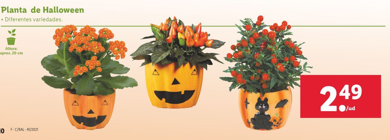 Oferta de Plantas por 2,49€