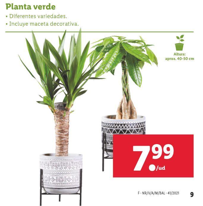 Oferta de Plantas por 7,99€