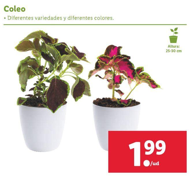 Oferta de Plantas por 1,99€