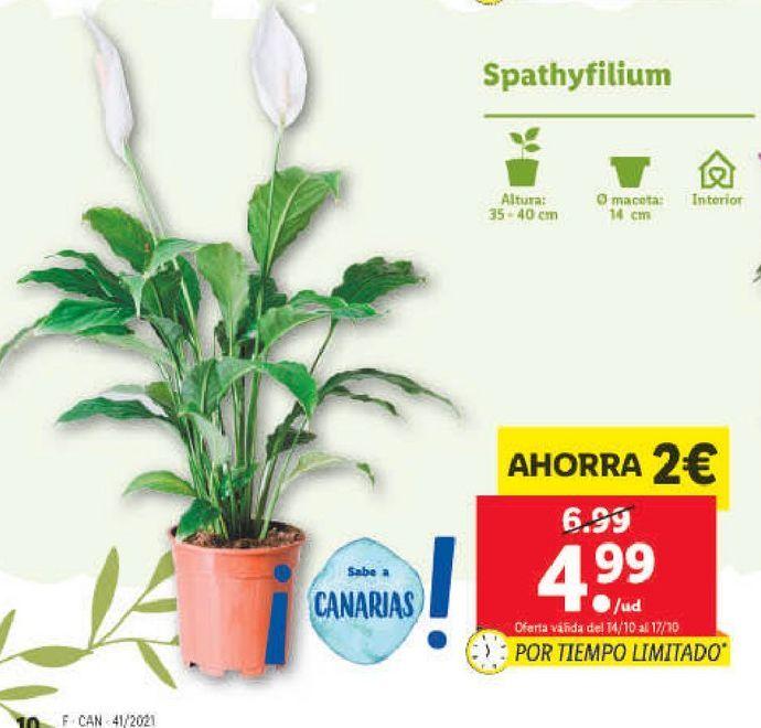 Oferta de Plantas por 4,99€