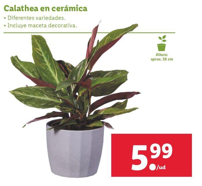 Oferta de Plantas por 5,99€
