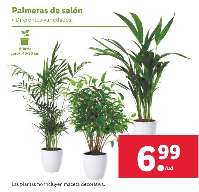 Oferta de Plantas por 6,99€