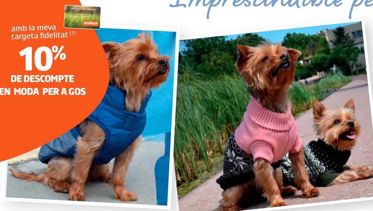 Oferta de Accesorios para perros por
